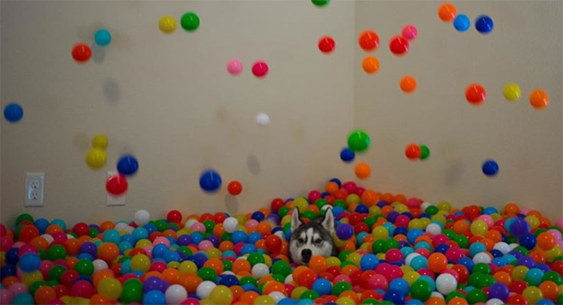 Awesome Dad Makes Ball Pit For His Dog