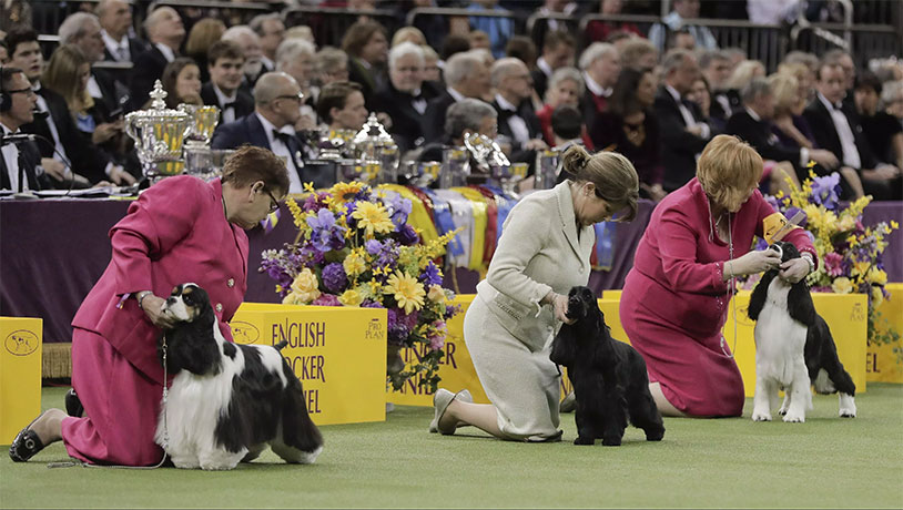 Why Do Dog Show Judges Touch Their Balls?