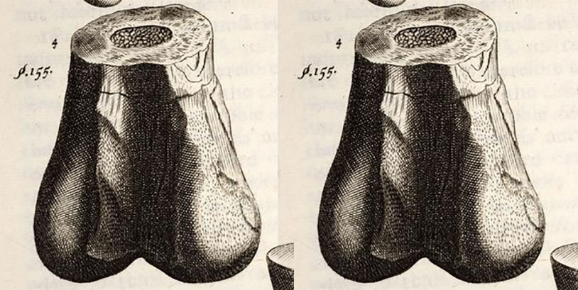 Paleontology Professor Forced To Take Ballsack Out Of Lecture
