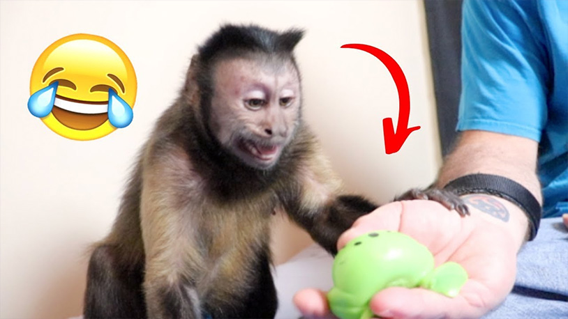 Watching This Monkey React To Squishy Balls Is The Best Thing You'll Do All Day
